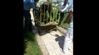 Atak nożownika w kurorcie w Egipcie. Nie żyją dwie osoby!