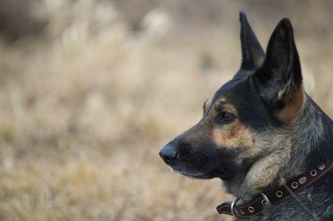 Ukraiński polityk polecił emerytce sprzedaż psa, aby miała za co żyć