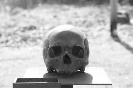 """Niemcy handlowali szczątkami zamordowanych Polaków. Teraz służą jako """"pomoce naukowe"""" na zachodnich uniwersytetach"""
