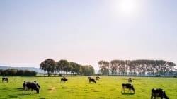 Kłopoty producentów wołowiny po pandemii koronawirusa