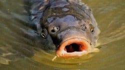 """Setki kilogramów martwych ryb zostało wyrzuconych do lasu: """"Brak nam słów"""""""
