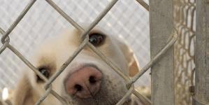 Spadek dla zwierząt. 100 tysięcy dolarów przepisane polskiemu schronisku