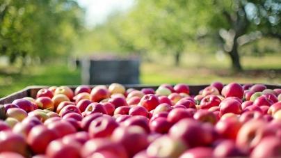 Ponad 50 tysięcy miejsc pracy w sektorze owocowo – warzywnym może zniknąć. Kłopoty przetwórców wpłyną także na rolników i sadowników…