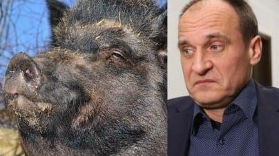 Paweł Kukiz porównał strzelanie do dzików z mordowaniem Polaków przez UPA [WIDEO]
