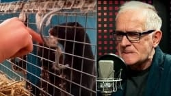 Nie będzie zakazu hodowli zwierząt futerkowych! Posłowie PiS złożyli autopoprawkę projektu ustawy