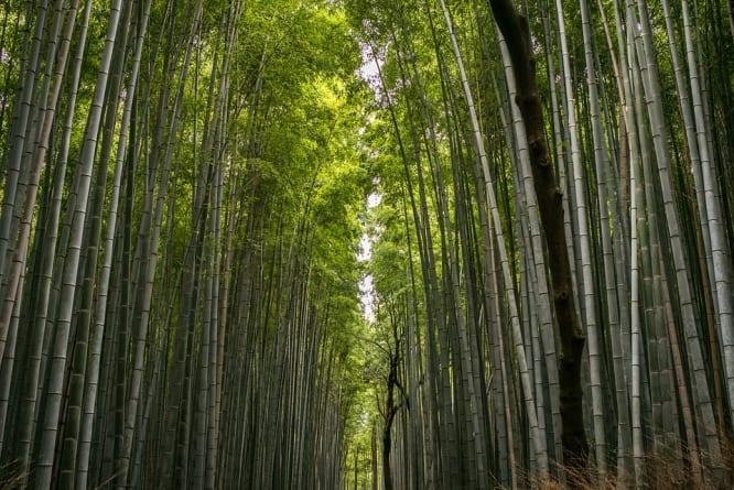 Indie: Mężczyzna sam zasadził las o powierzchni 550 hektarów