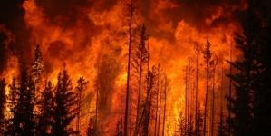 Wielki pożar w regionie Andaluzji. Ewakuowano 3500 mieszkańców