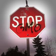 Dr Sachajko: Koncerny zarabiają na GMO olbrzymie pieniądze [WIDEO]