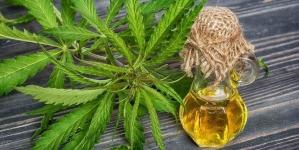 Jeszcze w listopadzie posłowie przeanalizują ustawę o depenalizacji marihuany