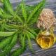 """Dr Sachajko: """"Konopie siewne są rośliną bardzo dochodową"""" [WIDEO]"""