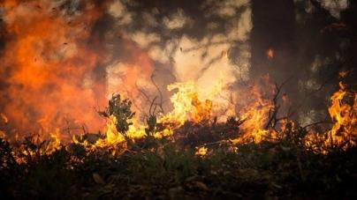 Komisja Europejska przewiduje: Europę będą nękać pożary