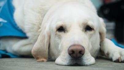 Zoofilskie usługi matrymonialne? Śmierć klienta oraz areszt właściciela psa