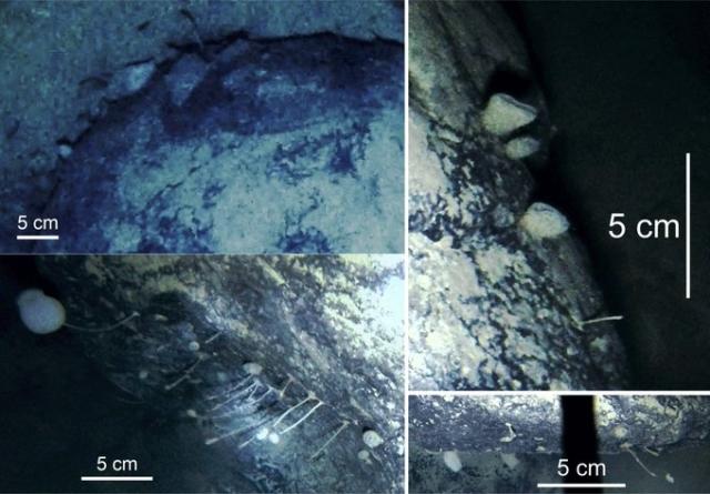 Antarktyda wciąż zachwyca. Badacze odkryli nowe gatunki zwierząt