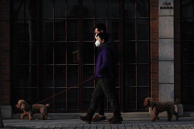 Koty i psy nie mogą zarażać koronawirusem? Rosyjscy uczeni nie mają wątpliwości