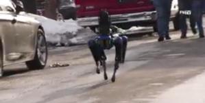 Nowojorska policja ma nowego psa… robota. Ruszył na patrole