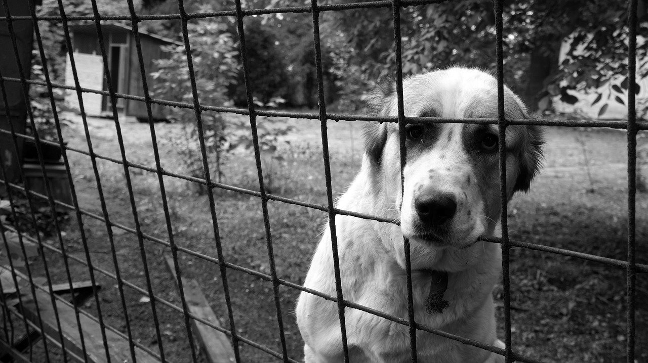 KO złoży projekt dot. ochrony zwierząt.
