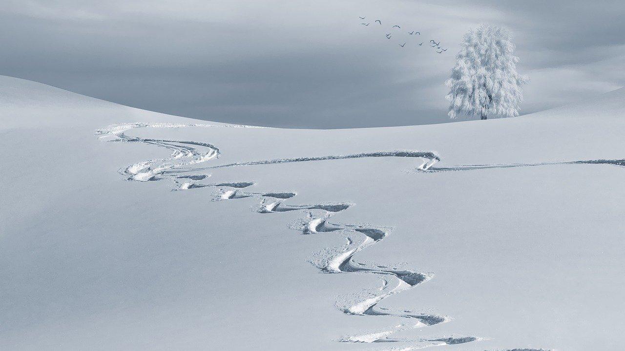 Ślady na śniegu.